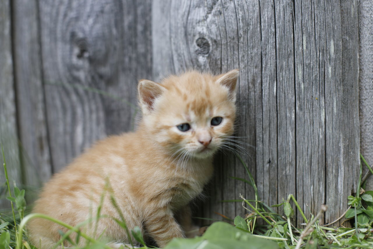 Animal Pets One Animal Young Animal Outdoors Animals In The Wild Cat Kitty No People Animal Wildlife Babycat Baby Animals Cat Lovers Cat Photography Cats 🐱 Catoftheday Newborn