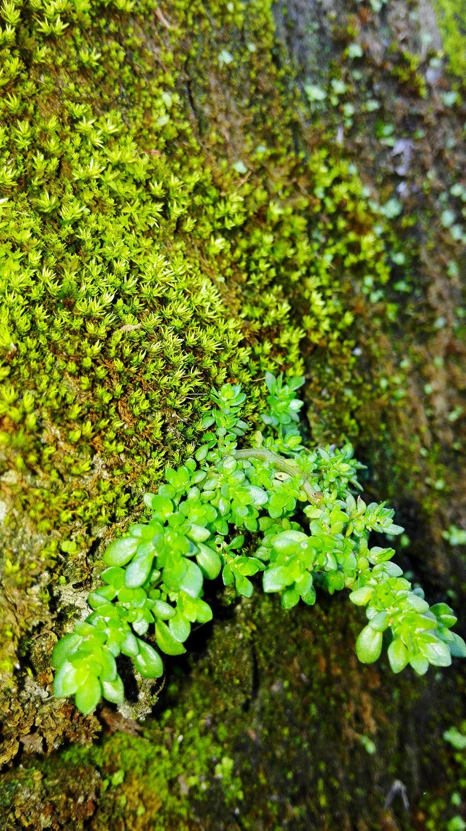 Sprint Enjoying Life Plants 🌱 Sprint Macro Close Up Green