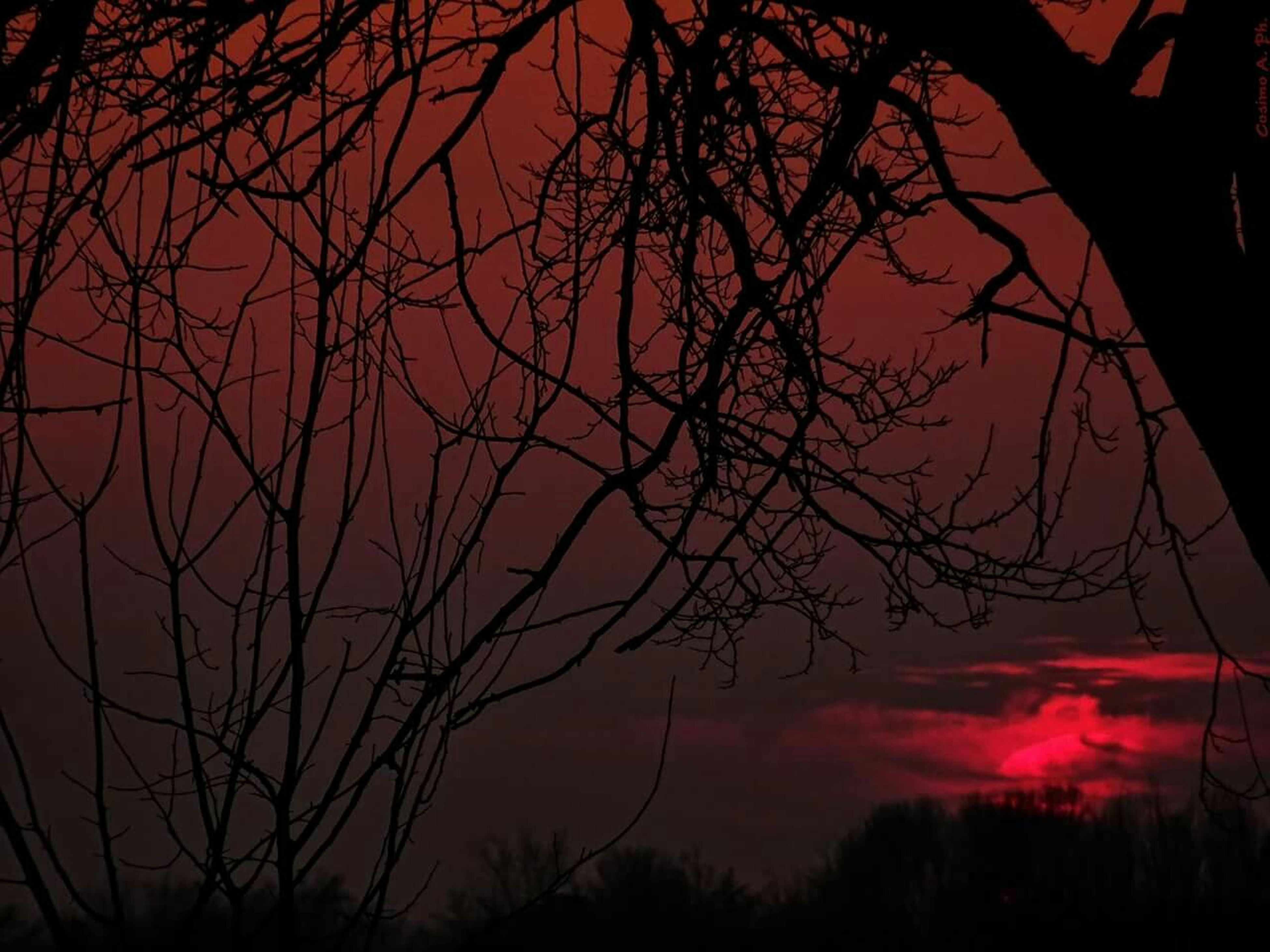 silhouette, sunset, bare tree, branch, tree, sky, tranquility, low angle view, beauty in nature, scenics, nature, tranquil scene, orange color, dusk, cloud - sky, idyllic, outline, outdoors, dark, no people