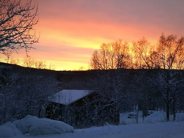 Morning Glory Sunset Tree Winter Snow Cold Temperature Beauty In Nature No People Dramatic Sky Sky Landscape Cloud - Sky Outdoors Nature Day