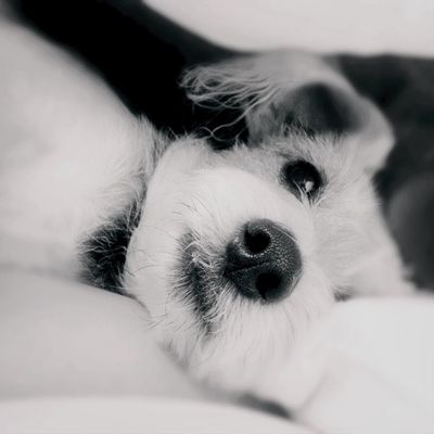Cute Pets Moong