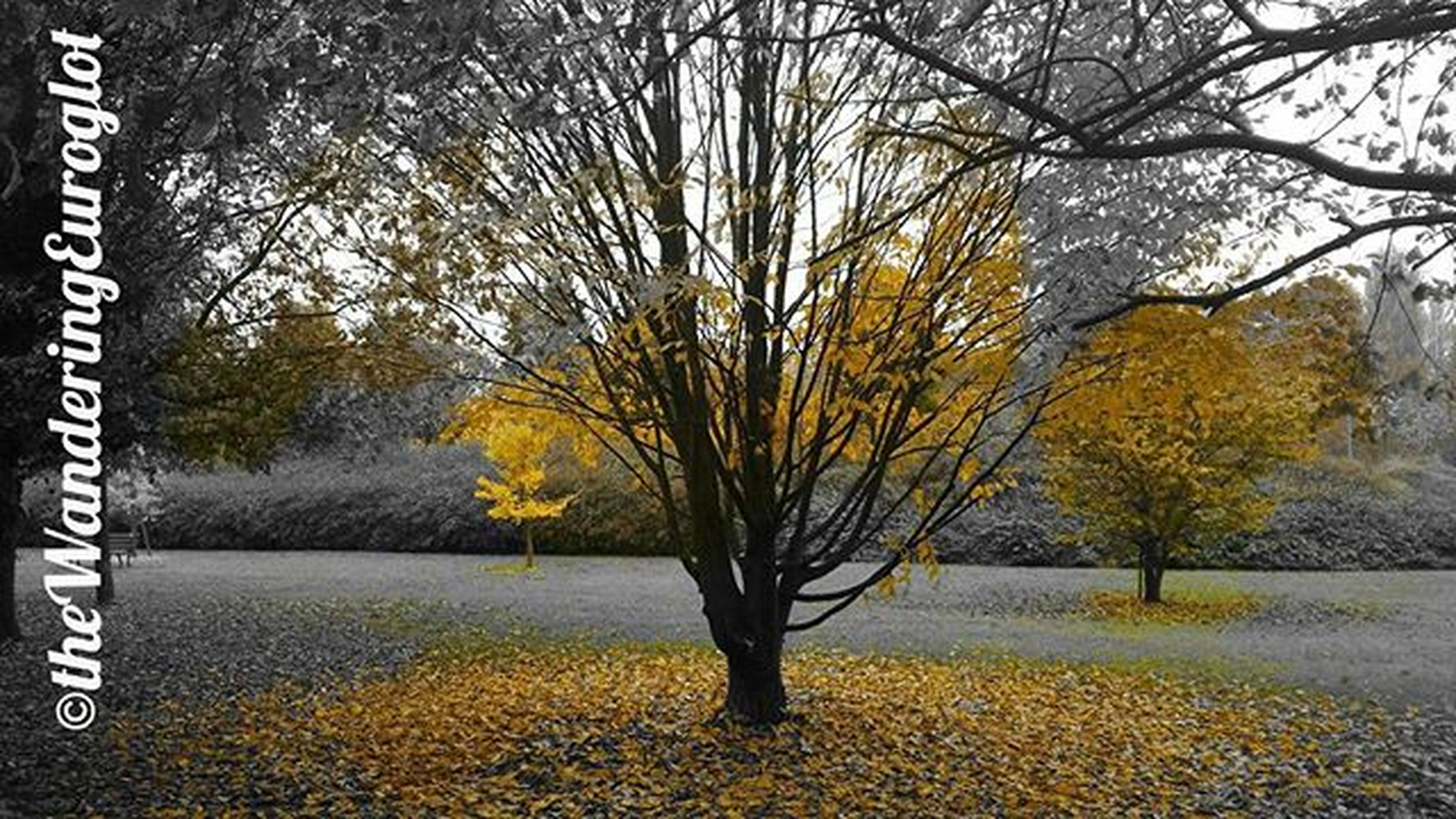 autumn, tree, season, change, water, branch, tranquility, nature, beauty in nature, tree trunk, leaf, tranquil scene, yellow, lake, bare tree, scenics, reflection, day, growth, outdoors