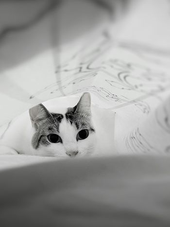 My Bela Cat Cats Cats Of EyeEm Cute Pets Sketch Close-up No People Childhood Day Animal Themes