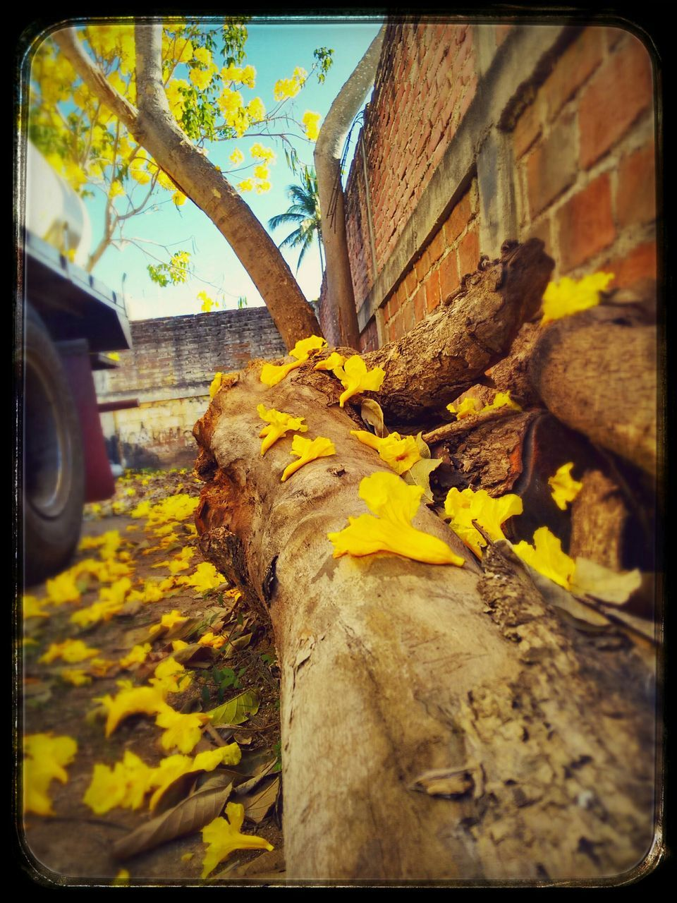 auto post production filter, yellow, outdoors, day, built structure, no people, architecture, tree, nature, plant, flower, leaf, growth, building exterior, tree trunk, close-up, low angle view, beauty in nature, freshness