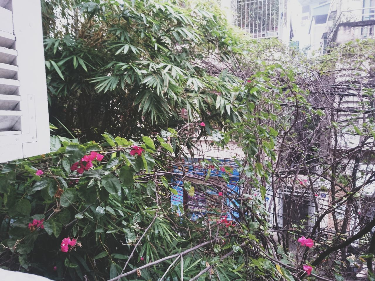 growth, plant, flower, building exterior, outdoors, architecture, no people, nature, day, built structure, tree, beauty in nature, city, bird