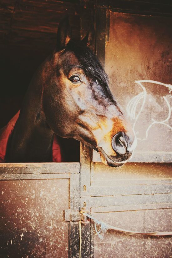 My Horse Horse Love ♥ Darkheart Stallion