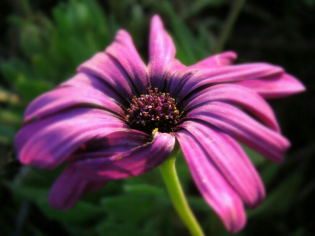 Fortheloveofcolor Taking Photos Beautiful Nature EyeEm Nature Lover EyeEm Macro Flowerlovers Macro_flower Flowers 🌷 Flowers 🌹 Purplicious