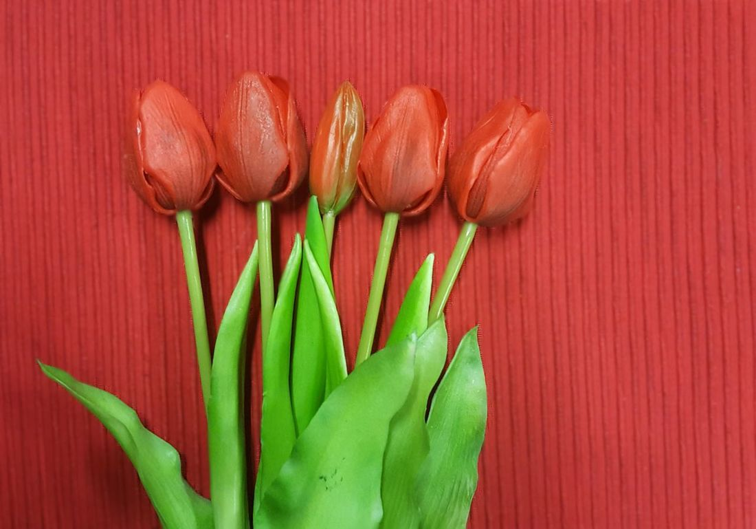 Freshness Red Green Color Close-up Nature Day Tulpen Tulps Tulpe Photography Tulp - Flower Backgrounds Background Own Creation