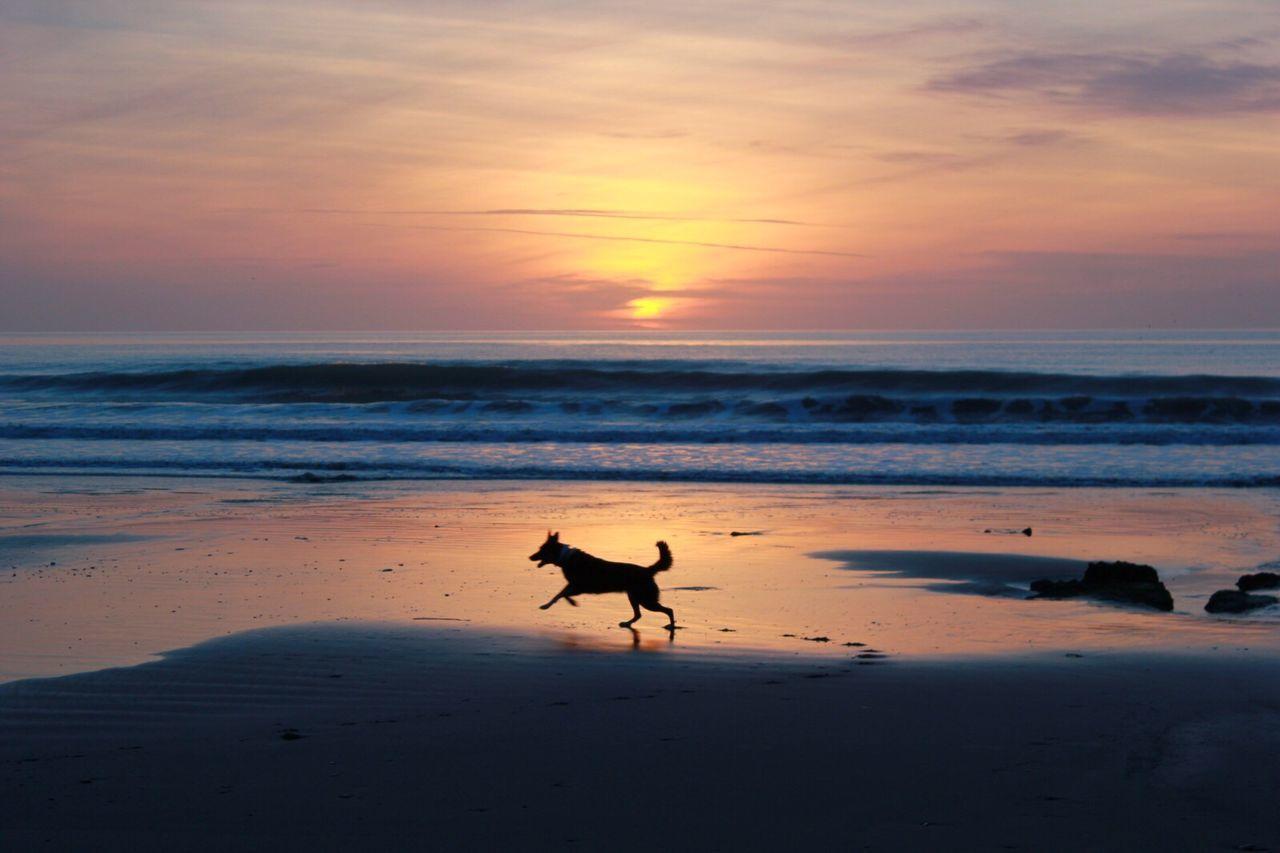 First Eyeem Photo Sunset Fresh On Eyeem  Silhouette Running Dog Beach EyeEm Best Shots - Sunsets + Sunrise