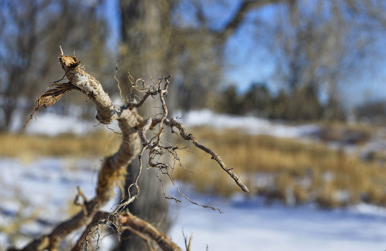 Twig so close Beauty In Nature Close-up Cold Temperature Day Focus On Foreground Nature No People Outdoors Sky Snow Tree On Ground Twig Art Winter
