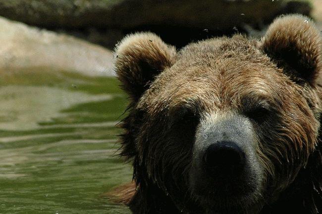 Chestetee Wildlife Rescue Park Taking Photos Wildlife & Nature My Best Photo 2014 Wildlifeconservation Bears Galore