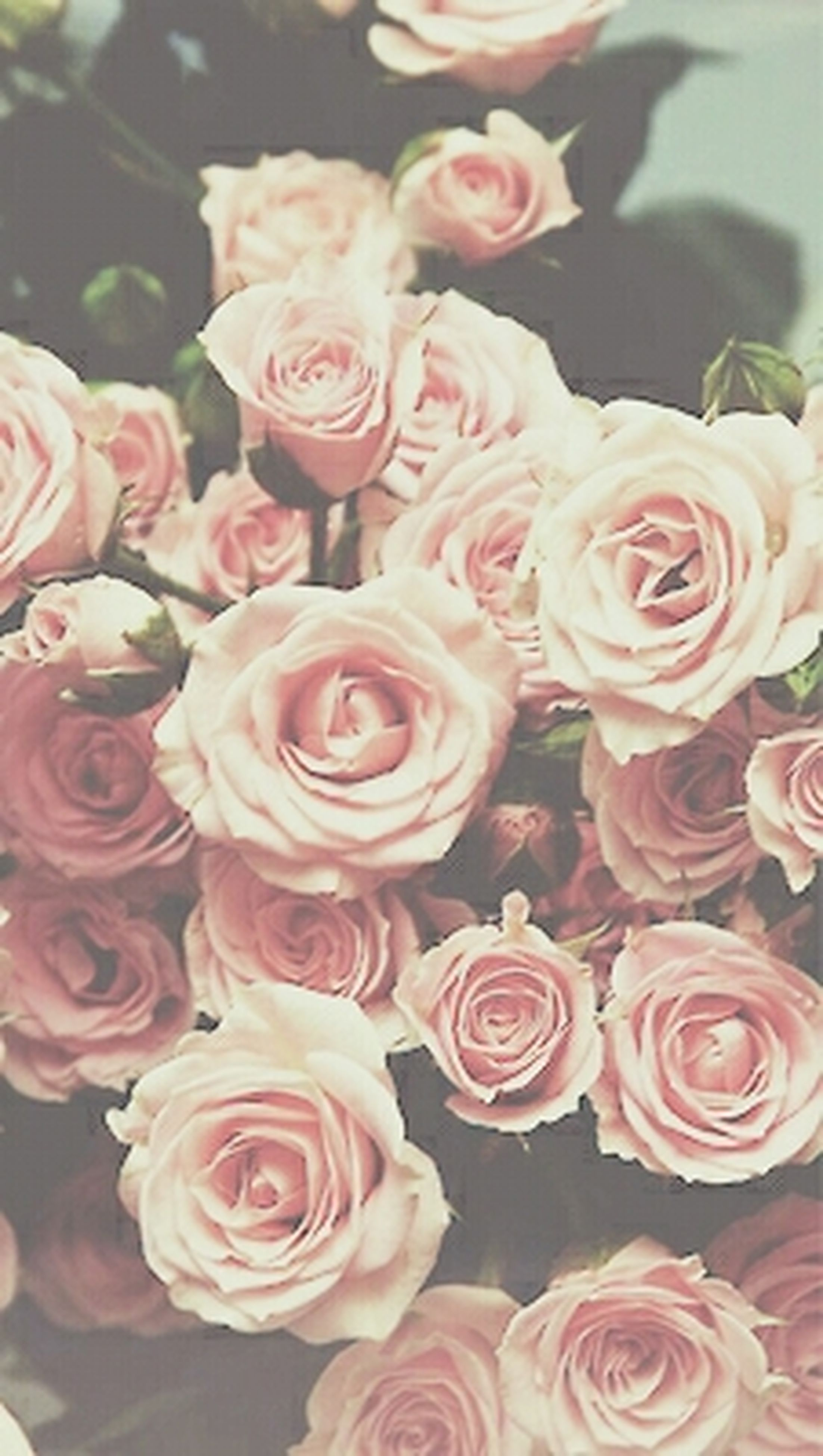 flower, freshness, rose - flower, petal, fragility, flower head, pink color, close-up, beauty in nature, indoors, rose, nature, bunch of flowers, blooming, pink, focus on foreground, growth, bouquet, no people, high angle view