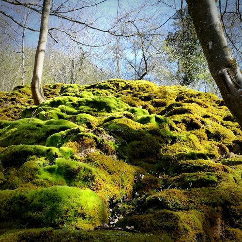 Outdoors Tree Nature Green Color Sky Moss Forest