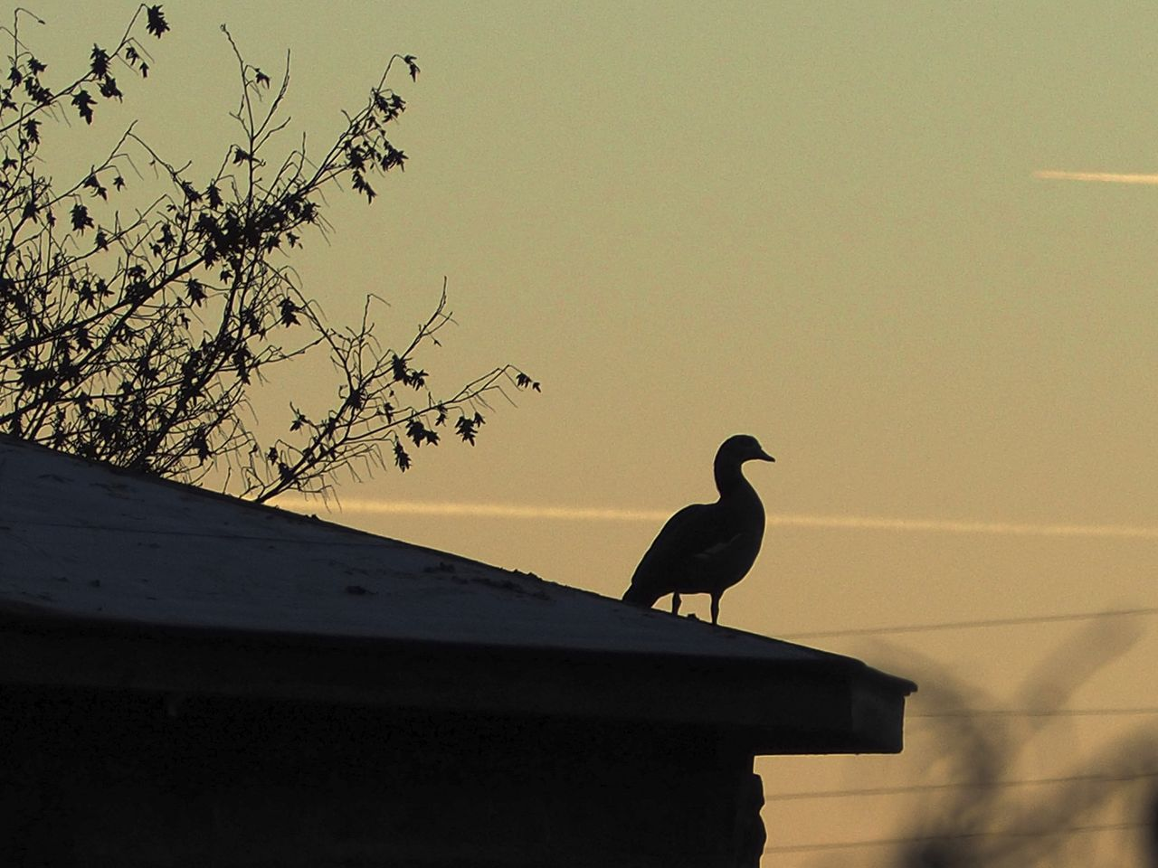 bird, animals in the wild, animal themes, silhouette, one animal, low angle view, perching, animal wildlife, sunset, nature, no people, clear sky, outdoors, day, beauty in nature, sky