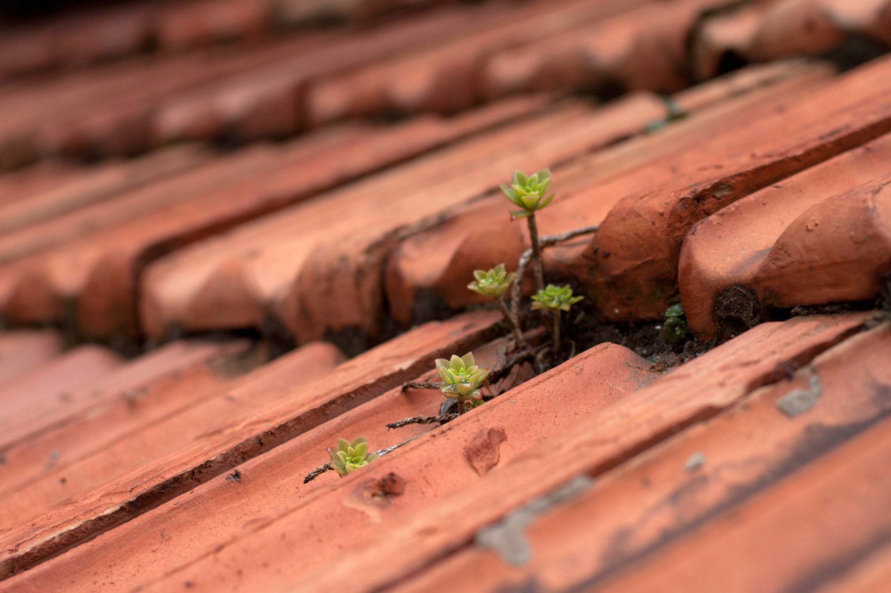 wood - material, selective focus, no people, outdoors, nature, plant, day, close-up