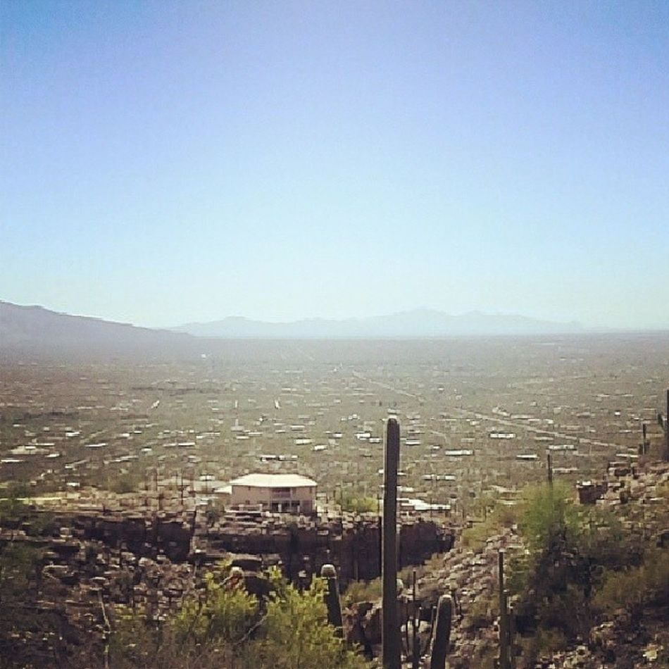 The city I live in, this big rotten cactus, lonely as I am, together we cry Tucson Mountlemmon