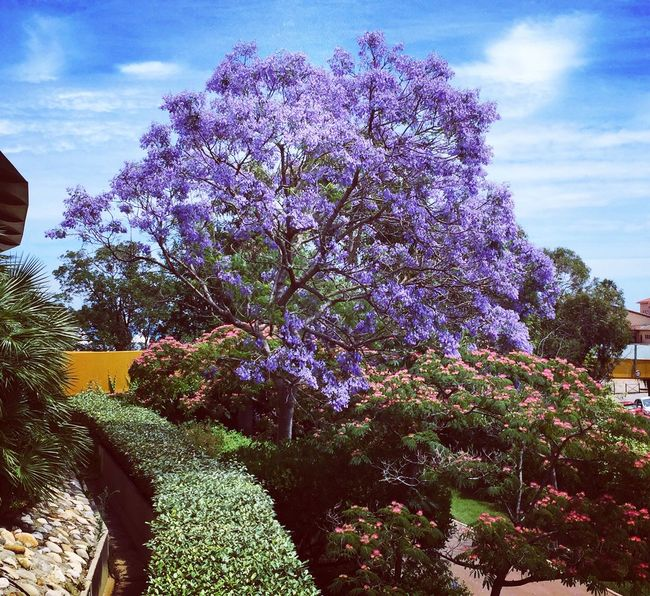 Colors Nature LovinLife Deep Bluesky Explosive Tree and Flowers Visit🇮🇹 IPhoneography Iphoneonly Iphonephotography Relaxing and Peace