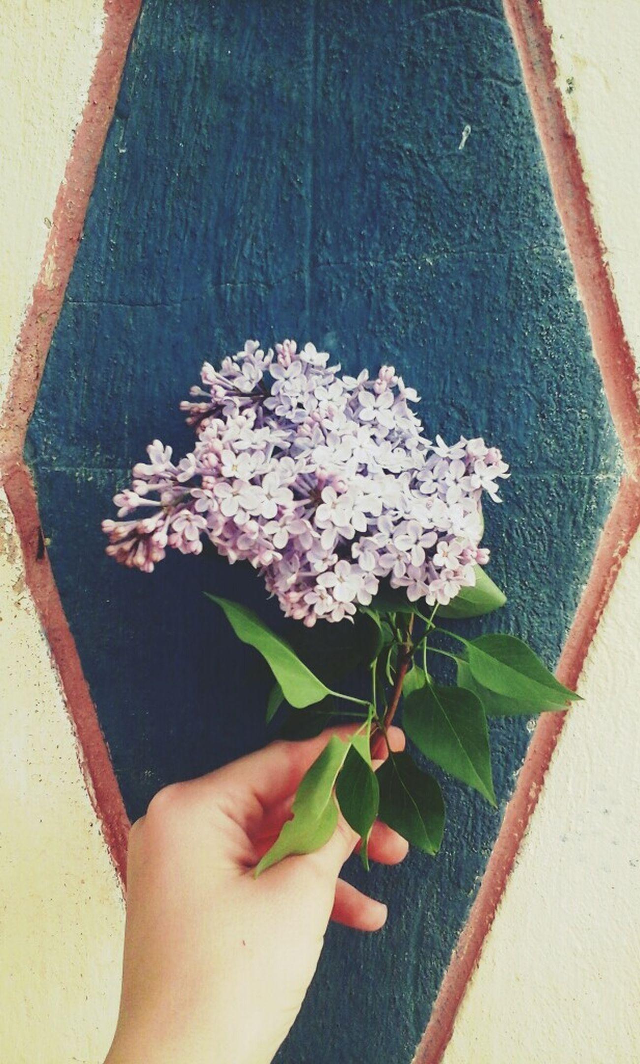 Flower рука сирень цветок  фиолетовый фиолетовый цветок Light Arm солнцесветит☺☀🌞 House стена Весна💐🌷🌿 весна2017 Веснаааа