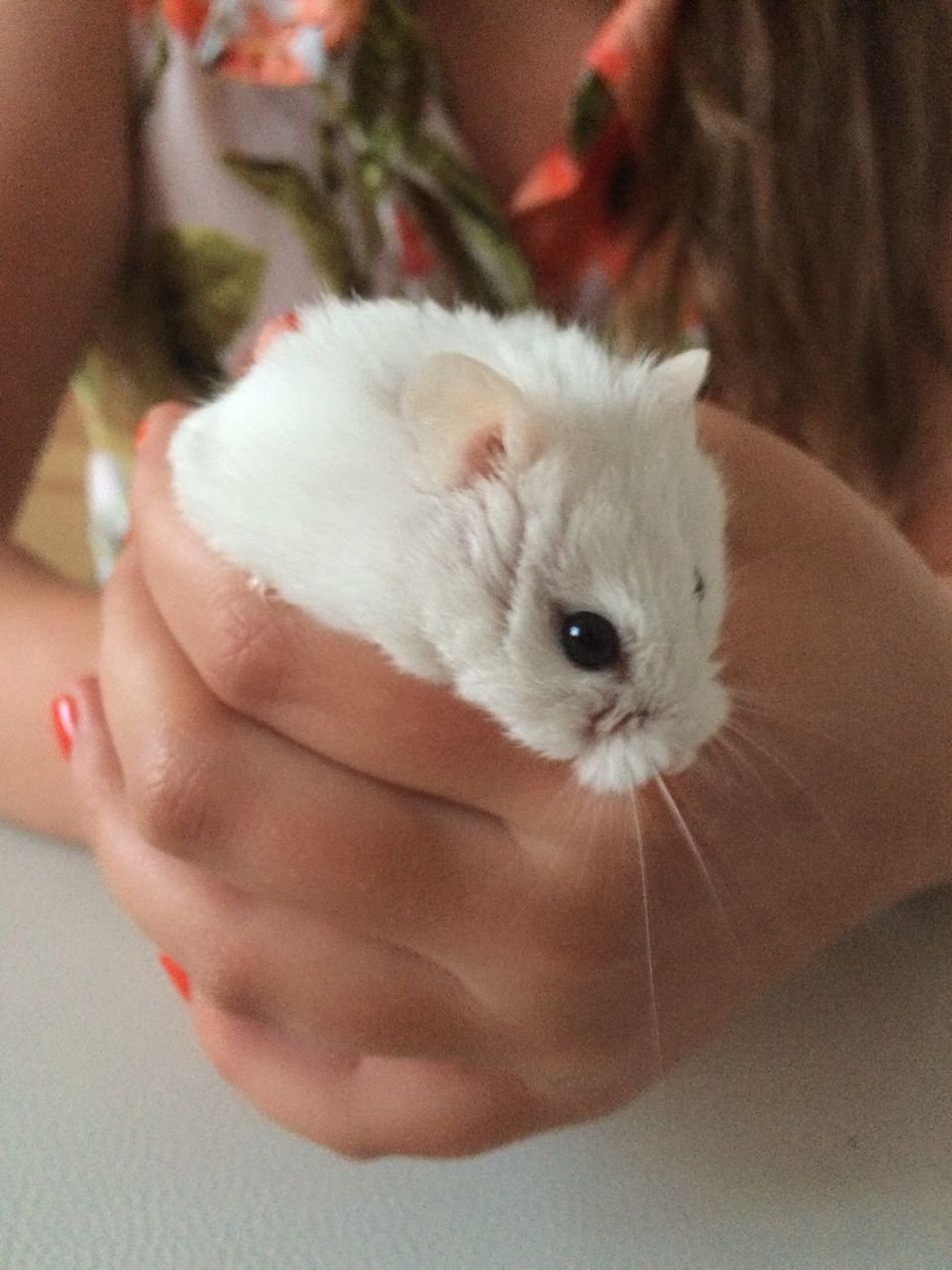 Beautiful stock photos of hamster, Animal Themes, Focus On Foreground, Hamster, Holding