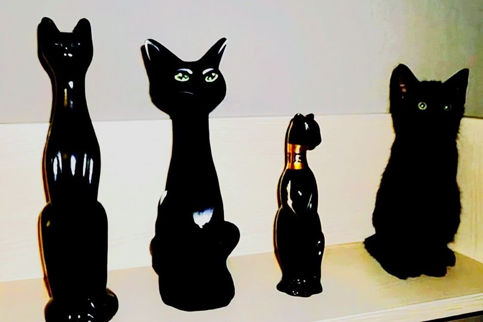 Figurine  Dramatic Sky Beauty In Nature Built Structure Day Domestic Life In A Row Archival White Background Cute Cute Cats Cute Animals Cuteeee♥♡♥ Cute Pets Cat