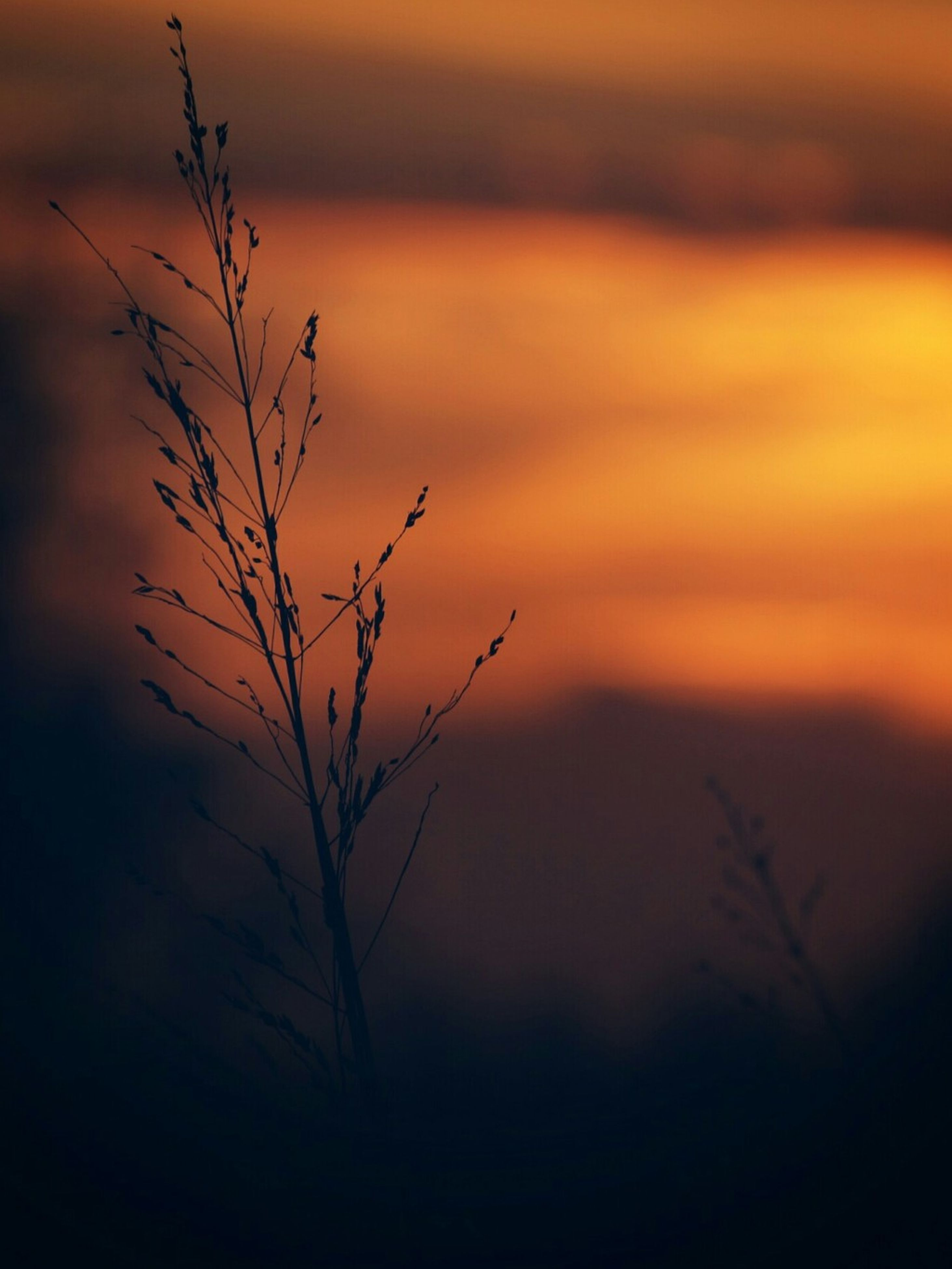 sunset, scenics, silhouette, tranquility, plant, beauty in nature, tranquil scene, nature, growth, close-up, focus on foreground, idyllic, orange color, majestic, branch, non-urban scene, dead plant, uncultivated, fragility, sky, outdoors, dramatic sky, outline, remote, solitude, no people, cloud - sky