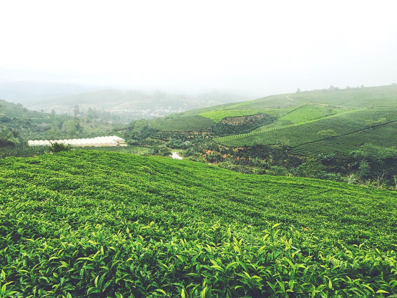 Cau Dat tea hill Dalat Vietnam Hills Leaves Trees Greenhouse Lake The Broad Life Thebroadlife