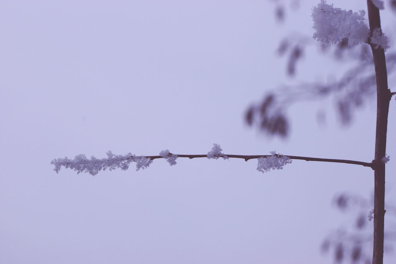Frozen Silky Barbed Wire Fence Security Separation No People Prison Tree Outdoors Nature Sky Day Snow ❄ My World ♥ Wintertime Hello World ✌ From My Point Of View Frozen Nature Frozen Cold Temperature Beauty In Nature Close-up Nature Shades Of Blue