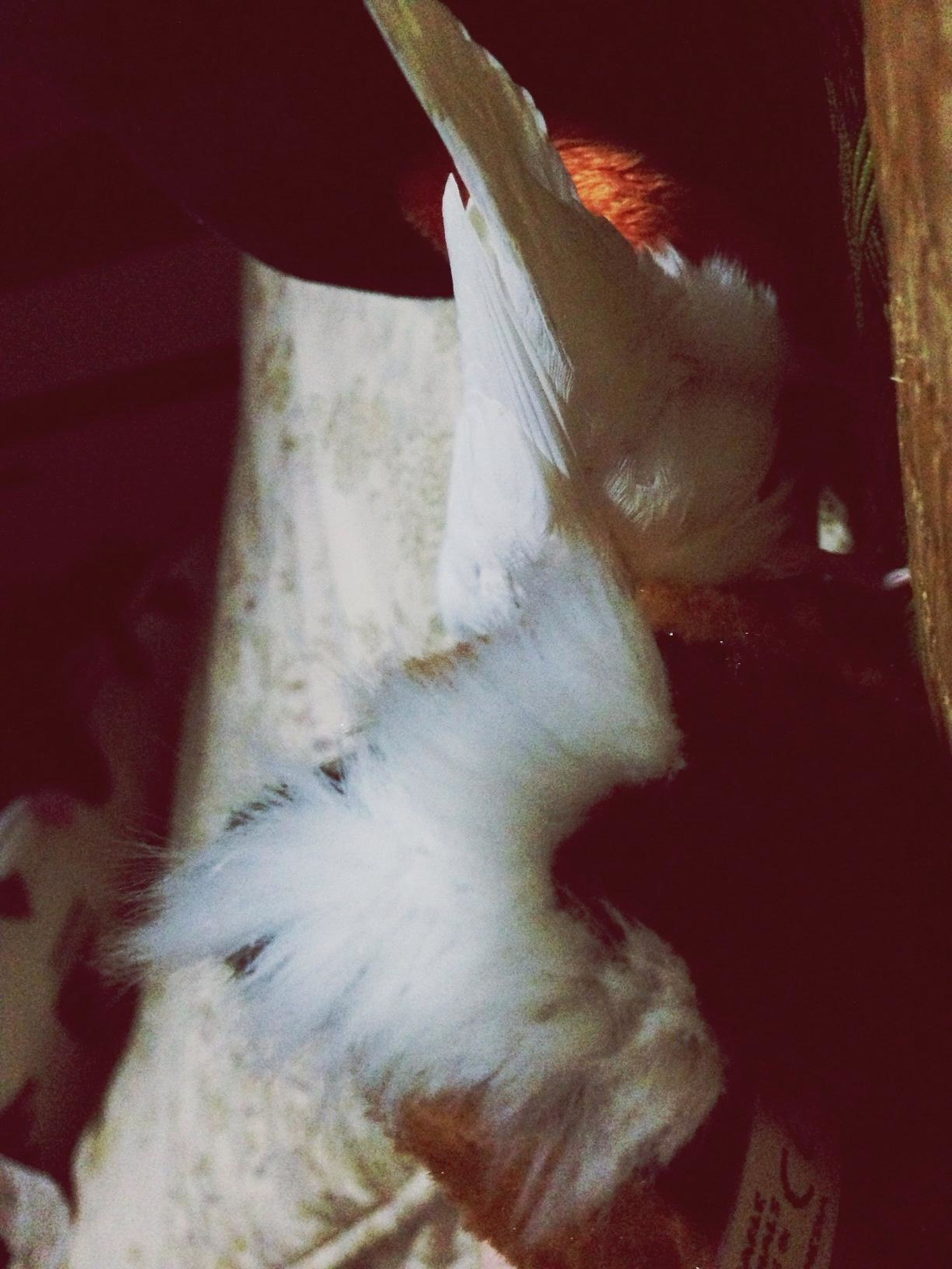 animal themes, domestic animals, one animal, mammal, pets, white color, indoors, domestic cat, close-up, part of, high angle view, cat, animal body part, animal head, dog, bird, cropped, no people, feline, livestock