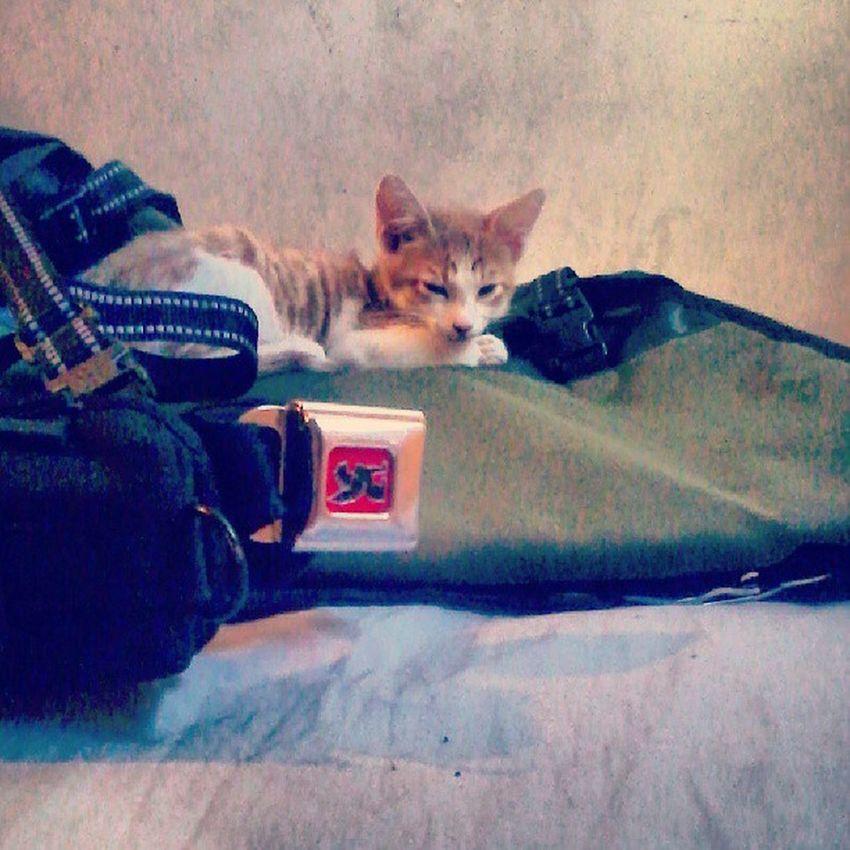 Cats like chrome bags. Cats Kitten Chrome Messengerbag sleeping stayfixed thefixedlife thenaplife kittensofinstagram hashtag adorable