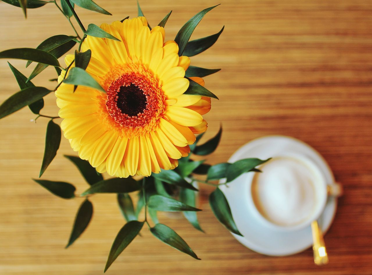 Beautiful stock photos of flowers, Beauty In Nature, Berlin, Coffee - Drink, Coffee Cup