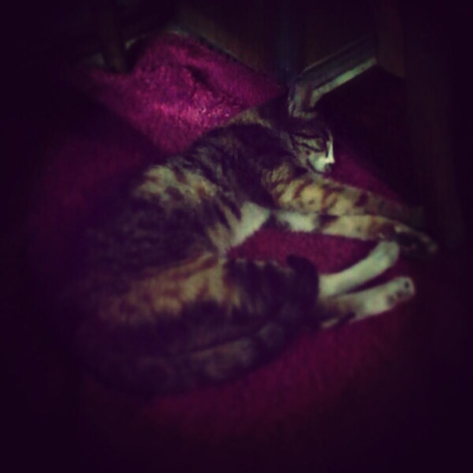Cats Sleeping Cat My Cat Sleeping <3