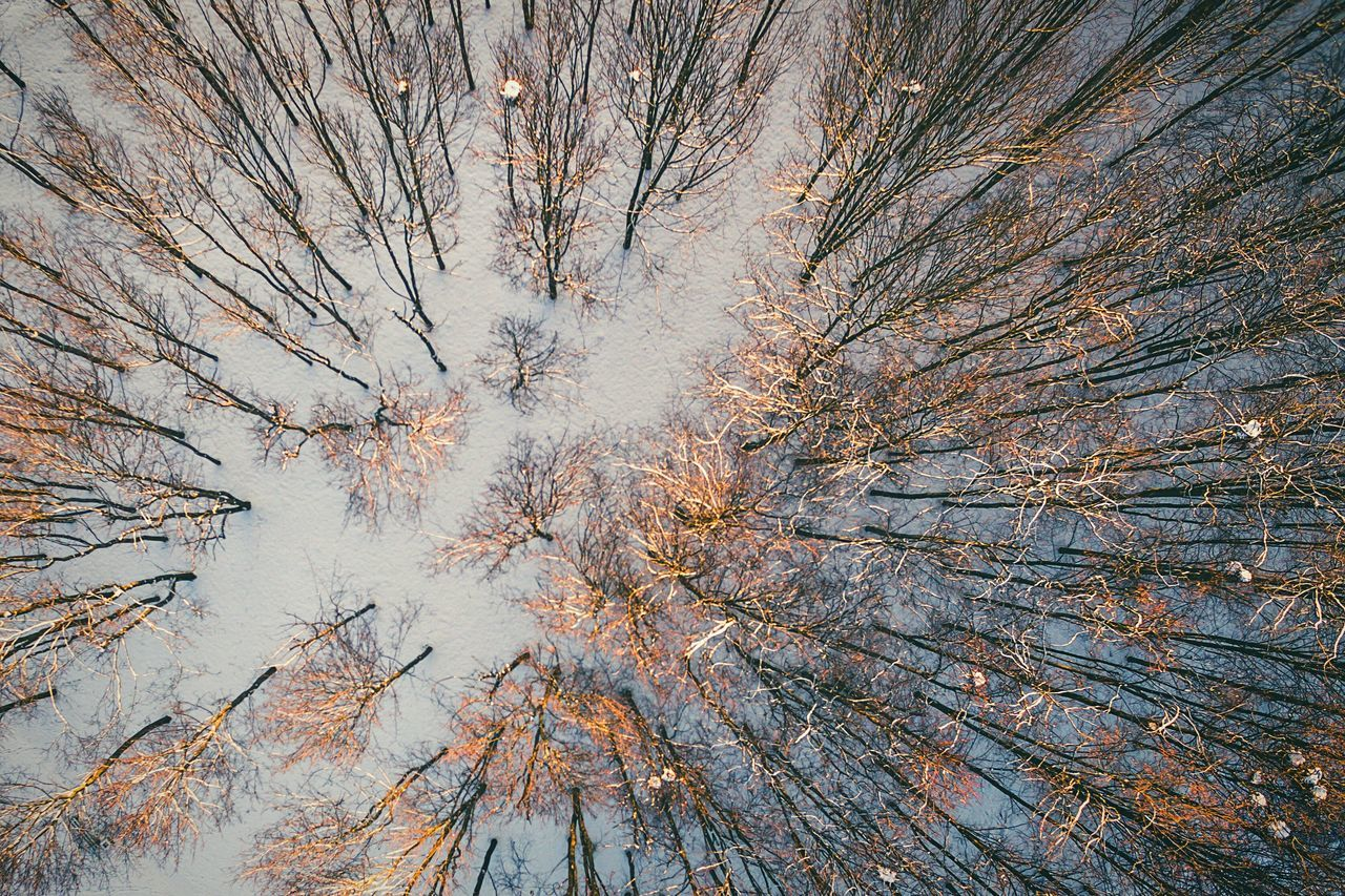 Sunset | Winter in Forest | aerial view | Tree Nature No People Growth Branch Outdoors Beauty In Nature Bare Tree Winter Day Backgrounds Sky Close-up Needle - Plant Part Dronephotography Drone  Dji Phantom Phantom 3 Advanced DJI Phantom 3 Snow Sun