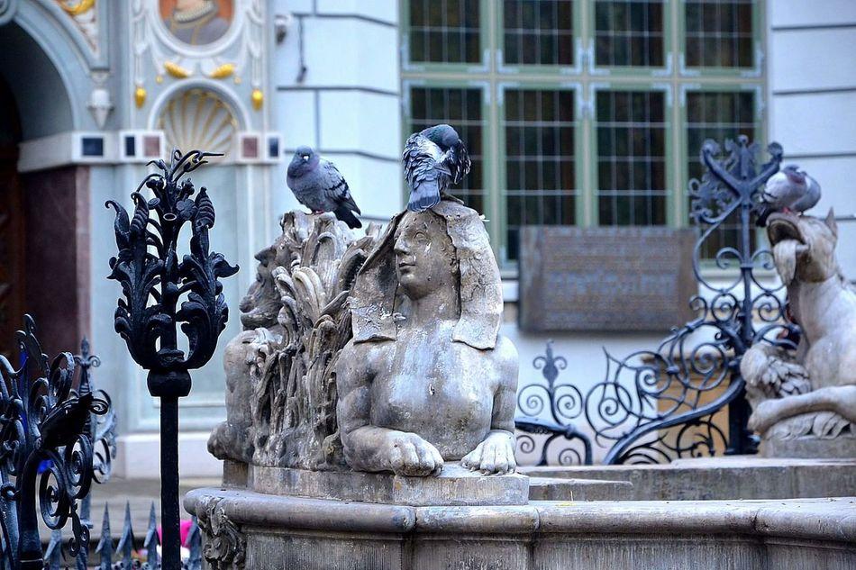 Statue Sculpture Architecture Building Exterior No People Close-up Outdoors Day Cityscape Gdańskeye Gdansk (Danzig) Gdańsk. Gdansk,poland Silhouette Gdansk_official City Urban Skyline