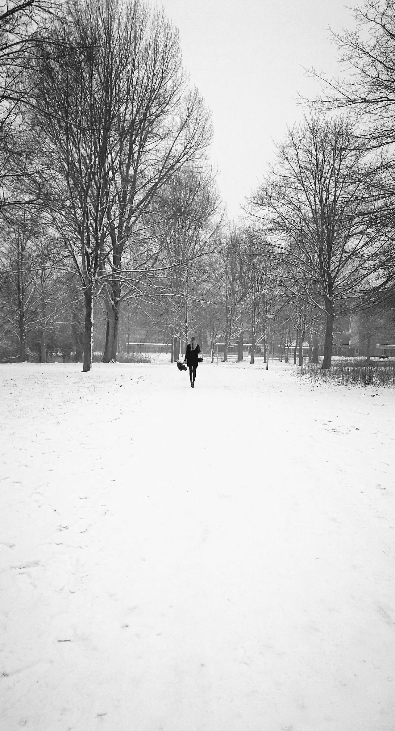 Winter Snow Cold Temperature Tree Nature Snowing Outdoors Silhouette Landscape One Person People Beauty In Nature Day Sky Black And White