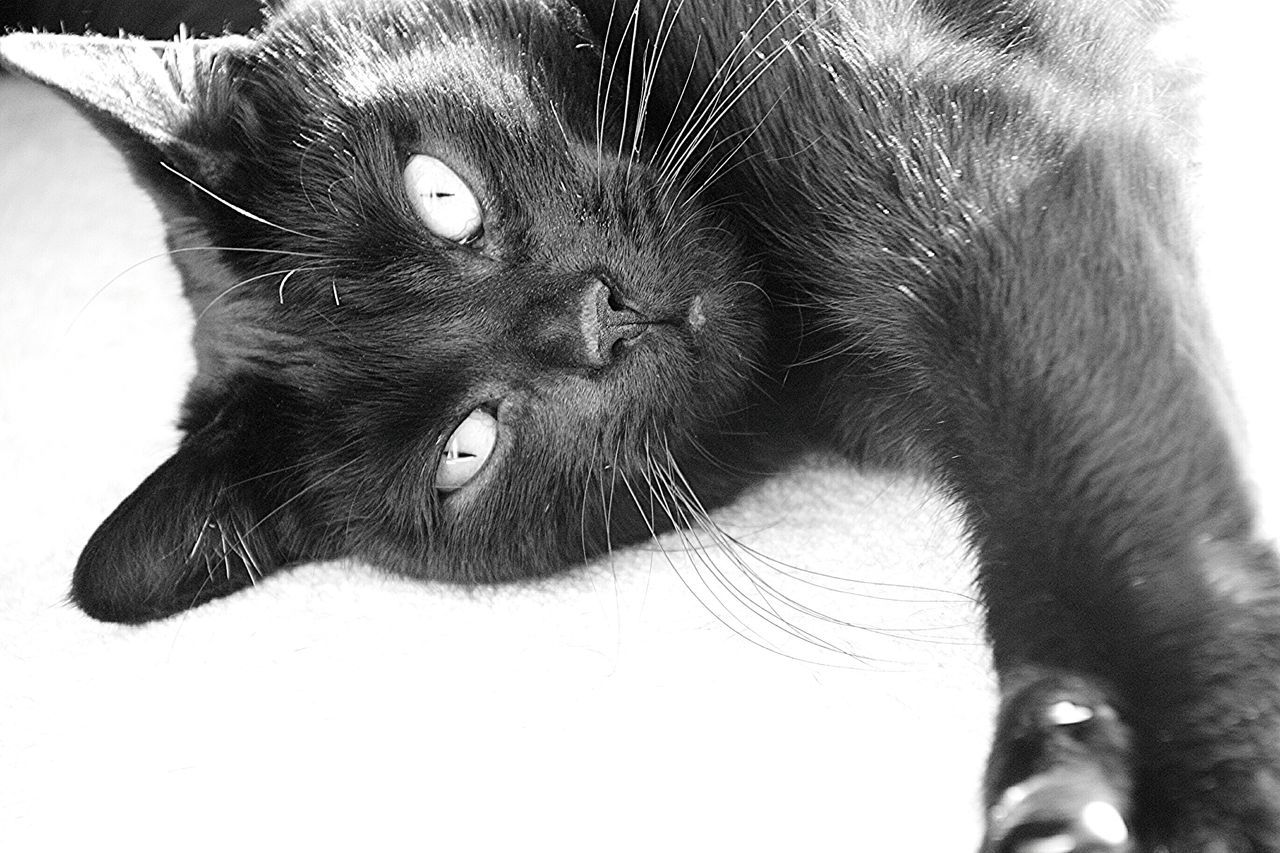 Cats Cats Of EyeEm Cats 🐱 Black Cat Black Cats Black Cats Are Beautiful Black & White Black Cats Lovers Black And White Photography