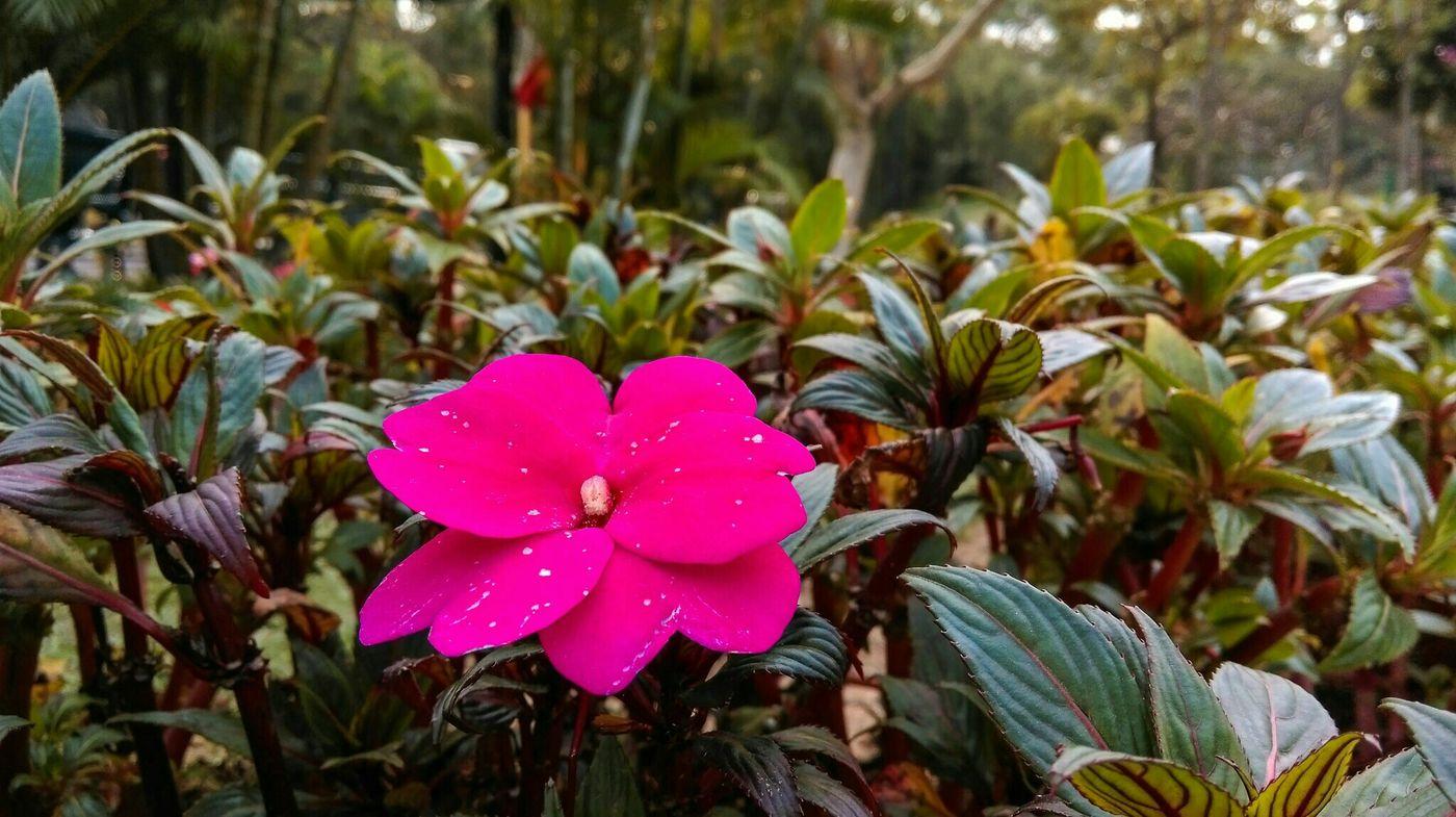Spring is definitely here. Flowers are blooming Macro Walking Around Flowers Sunshine Spring Flowers