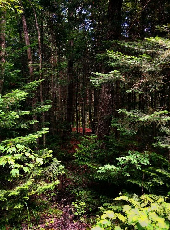 The Dark Forest In The Forest Forest Path Getting Inspired
