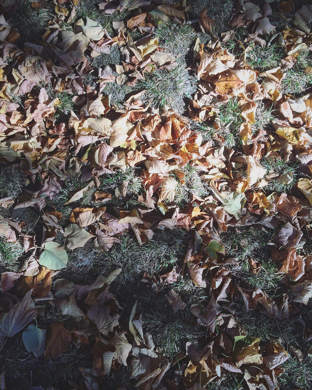 leaf, autumn, change, dry, leaves, nature, fallen, abundance, day, outdoors, no people, high angle view, field, plant, full frame, ivy, maple leaf, growth, fragility, close-up, backgrounds, forest, beauty in nature, maple