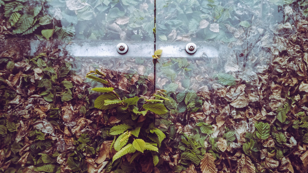 Art Nature Beauty In Nature City Life Close-up Day Eyes Fence Fragility Green Color Growth I See Faces Leaf Metal Sculpture Nature No People Outdoors Plant Plastic Point Of View