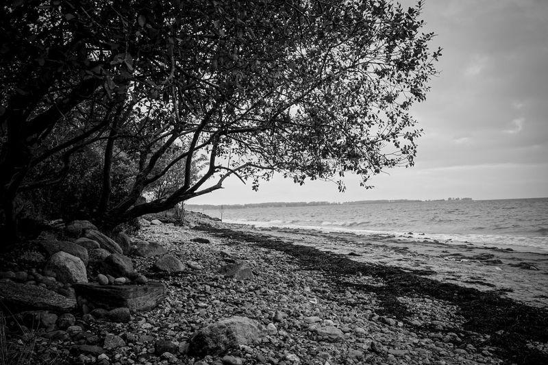 Stone Beach Beach Sea Horizon Over Water Water No People Stones Tree Tree Silhouette Black And White Blackandwhite Black & White
