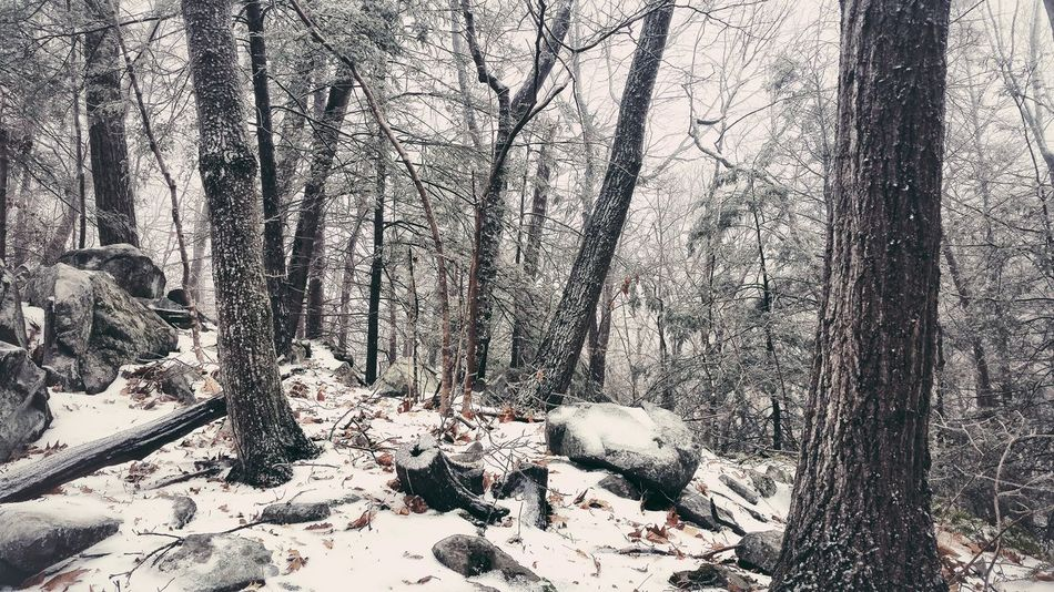 Cold!!!! Snow Winter EyeEm Nature Lover From Where I Stand Nature Forest On A Hike Trees EyeEm Best Shots Earth Tree_collection  Soltitude Peace And Quiet Go Outside