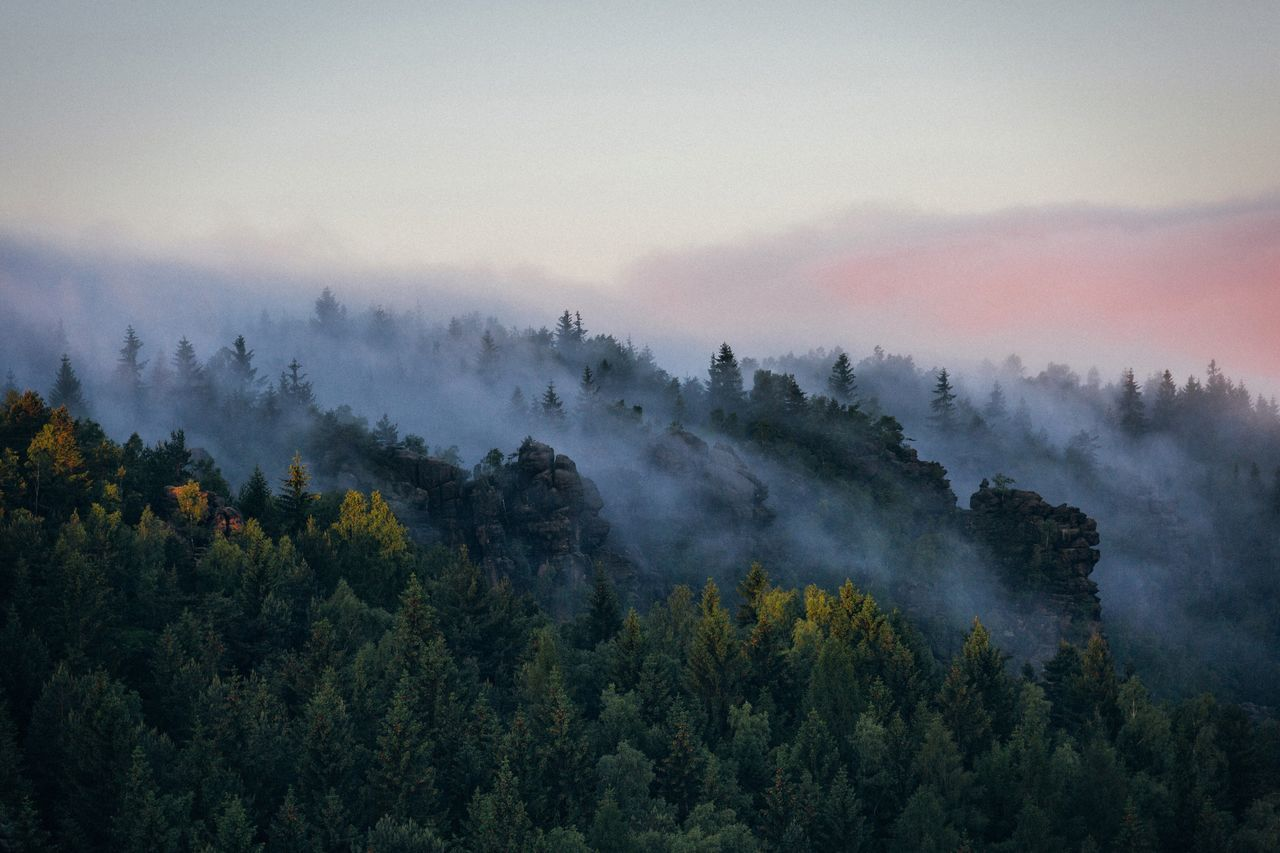 Fog all over the hills Saxony Forest Germany Mountain Range Sunrise Earth Summer Nature The Great Outdoors - 2016 EyeEm Awards Landscape Travel EyeEm Best Shots VSCO Remote Mountain Vscocam Explore Outdoors Photography Rural Traveling Beauty In Nature Travel Destinations