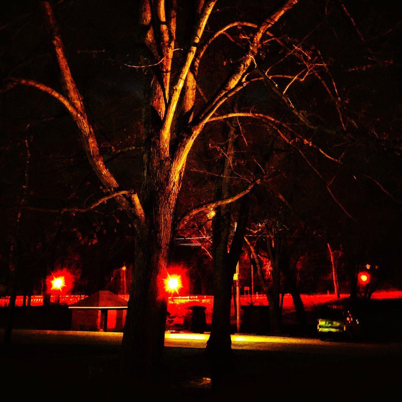 night, illuminated, tree, outdoors, car, no people, bare tree, nature, branch, city, sky, scenery