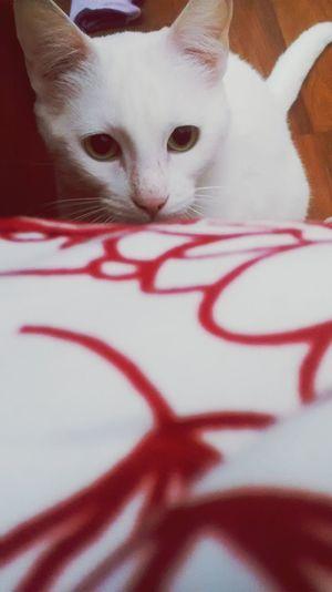 hey, Meow! ?❤ First Eyeem Photo