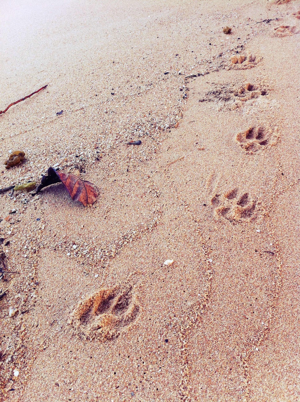 dog pad in Bang Sare Dog Pad