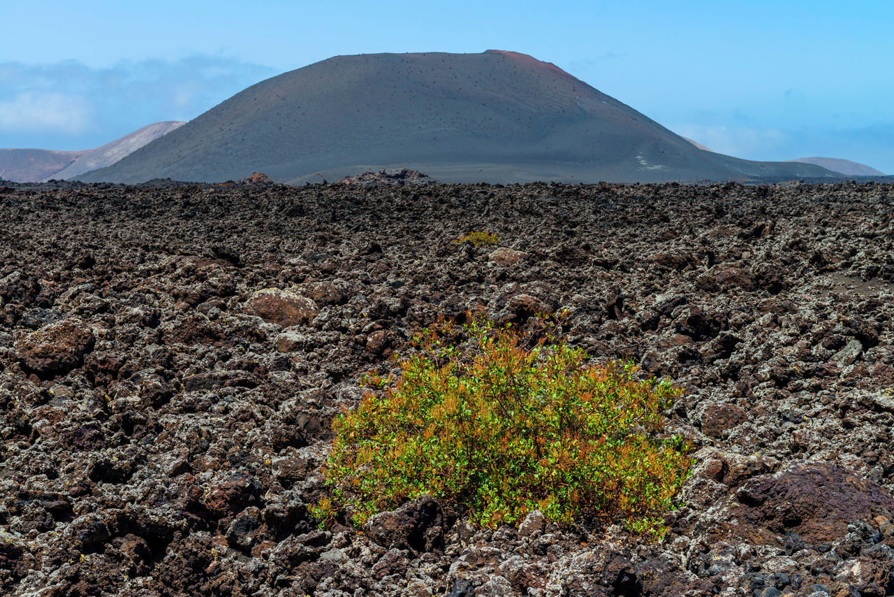 Beautiful stock photos of volcano, Day, Field, Growing, Growth