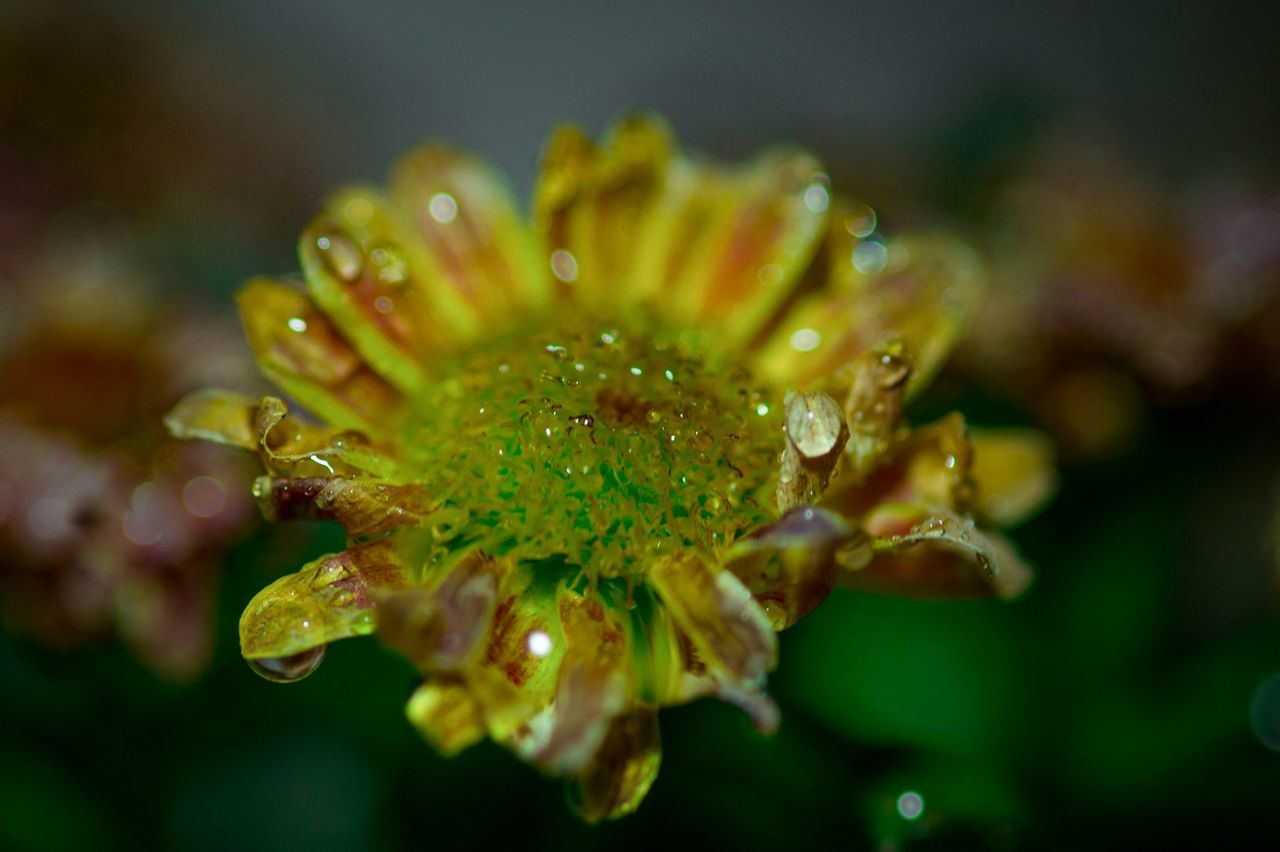 https://youtu.be/XmSdTa9kaiQ 🎵🎵🎵👈 Nature Growth Beauty In Nature Close-up Plant Wet Water Outdoors Flower No People Beauty Freshness Day Fragility My Unique Style Natures Diversities Exceptional Photographs Tranquil Scene Beautiful Nature Drop Of Water Drops_perfection Drop Drops Of Rain Drop Collection Freshness