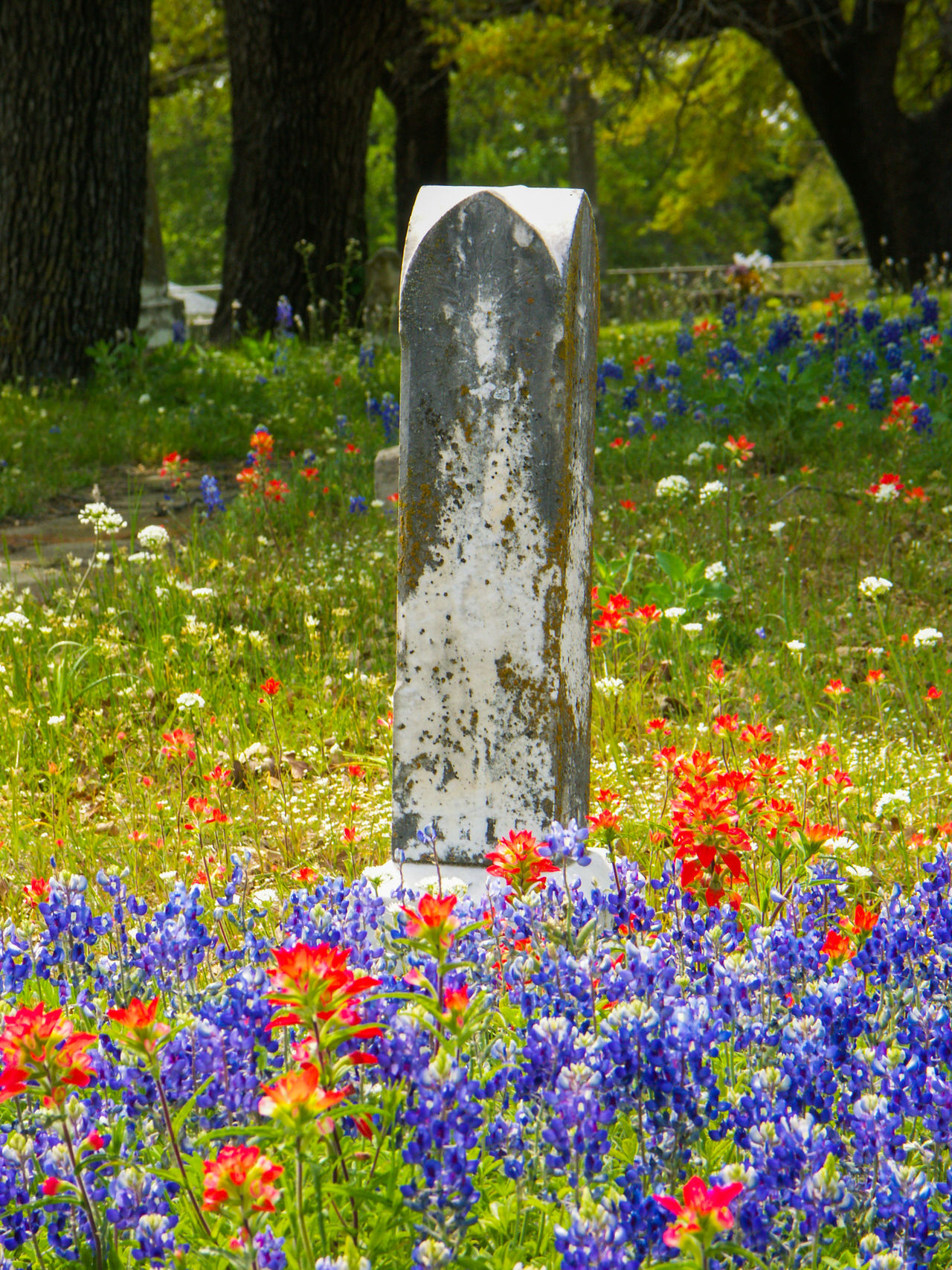 Texas graveyard in the spring with bluebonnets and indian paintbrush Bluebonnets Cemetery Cross Day Flower Flowers Grave Graveyard Graveyard Beauty Memorial No People Outdoors Spring Stone Material Summer Tomb Tombstone Wildflowers