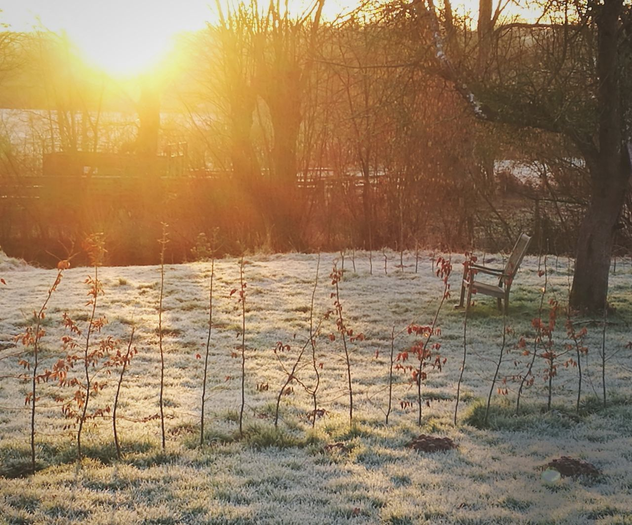 My French countrylife. Early walk in the frosty garden . Tree Sunlight Landscape Grass Nature Garden Photography Sunrise Beauty In Nature Pond France Frenchgarden Day Walking First Eyeem Photo Mobilephotography No People