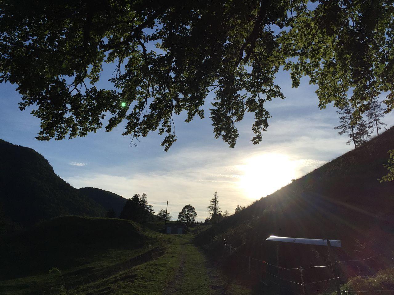sun, sky, sunset, tree, nature, undervelier, jura, switzerland, Found On The Roll